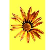 Wildflower on yellow Photographic Print