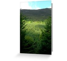 Forest at Lake District Greeting Card