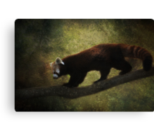 R is for.....Red Panda Canvas Print