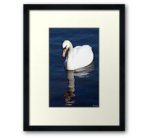 The Ugly Duckling.... Framed Print