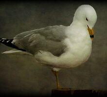 Elegance (Ring-billed Gull) by Robert Miesner