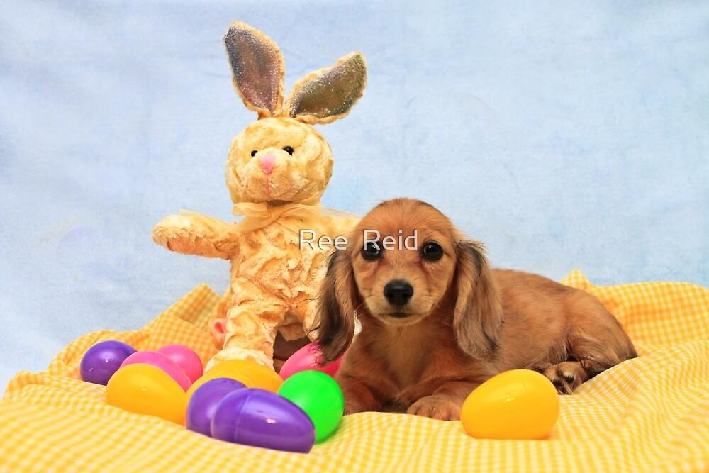 Easter Pup by Ree  Reid