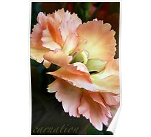 Carnations and Falling In Love Poster
