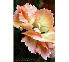 Carnations and Falling In Love Photographic Print