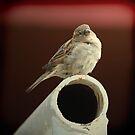 Piros Bird by Virag Anna Margittai