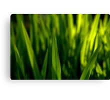 Grass is Greener? Canvas Print