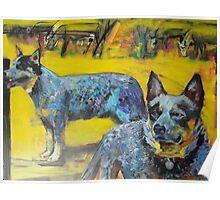 Australian cattle dogs. Poster