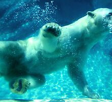 NC Polar Bear by Melissa Ann Blair