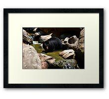 North American Black Bear Framed Print