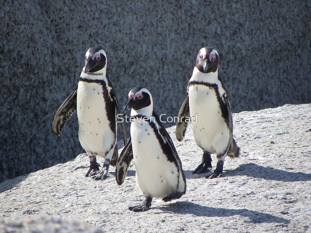 3 Penguin by Steven Conrad