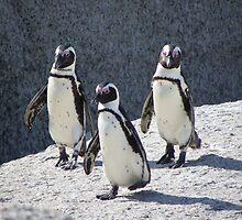 3 Penguin by Steven Conrad