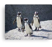 3 Penguin Canvas Print