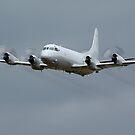 RAAF Lockheed AP-3C Orion  by Cecily McCarthy