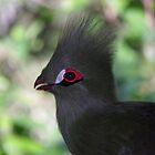 Black Bird by Steven Conrad