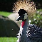 Fancy Bird by Steven Conrad