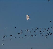 Birds in sky by Steven Conrad