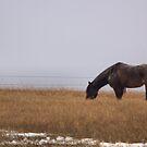 Eagle Horse by JamesA1