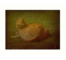 Louie the Cathedral Cat Art Print