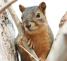 Squirrel in a Cottonwood by mokacat