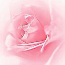 Portrait Of A Rose by Aj Finan