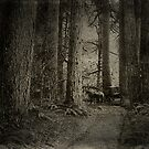 Carriage In The Woods by garts