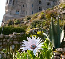 st michaels mount nt property by mikalo