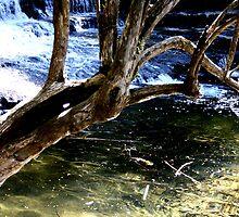 Cold Dip:- Liffey falls  Tasmania by starvingphoto