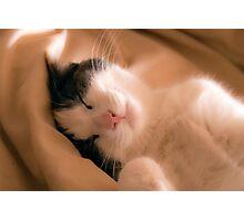 Warm snuggles Photographic Print