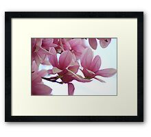 Glorious Pink! Framed Print
