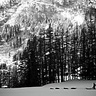 Dog Sled - Argentiere by Adam Johnston