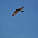 Free as a bird by Owen65