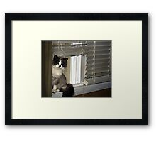 Cat Hello Framed Print