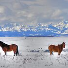 Snow Horses in HDR by Judy Grant