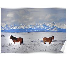 Snow Horses in HDR Poster