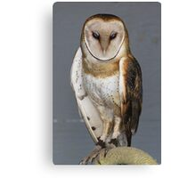 "Barn Owl - ""Casper"" Canvas Print"