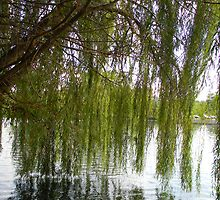 Willow dancing on the water by Mannabelles