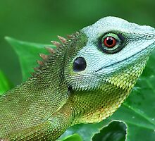 Red Eye by Mark Lee