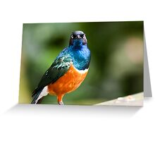 Look Straight Greeting Card