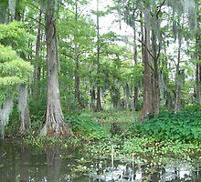 Do Not Feed the Gators - Cypress Lake, LA by Danielle Ducrest