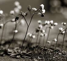 Gathering by Anne Staub