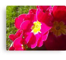 Flowers. Canvas Print