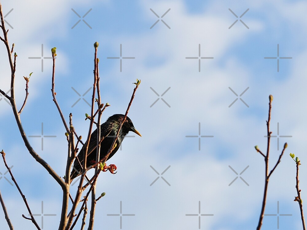 A Starling For Mozart by Gretchen Dunham