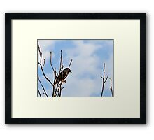 A Starling For Mozart Framed Print
