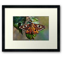 Una farfalla? Chi sa? Framed Print