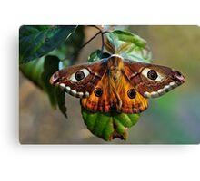 Una farfalla? Chi sa? Canvas Print