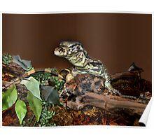 (。◕‿◕。) Monitor Lizard (。◕‿◕。)  Poster