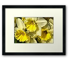 Yellow, Frilly, Daffys Framed Print