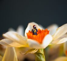 Tiny Nature Photographer by beanphoto