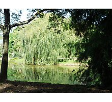 ~` Willow Lake `~ Photographic Print