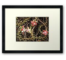 Cannon tree flower Framed Print